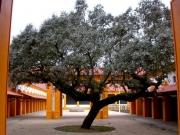 Coudalaria-Alentejo-Portugal (7)
